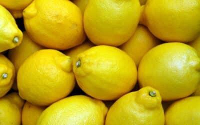 EINFACH Zitronen